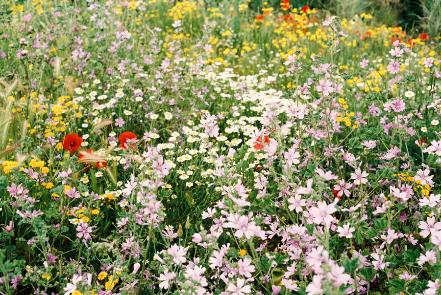 flores primavera 2018 El Pardo Madrid